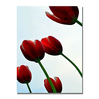 Trademark Fine Art Michelle Calkins 'Red Tulips from the Bottom Up' Canvas Art