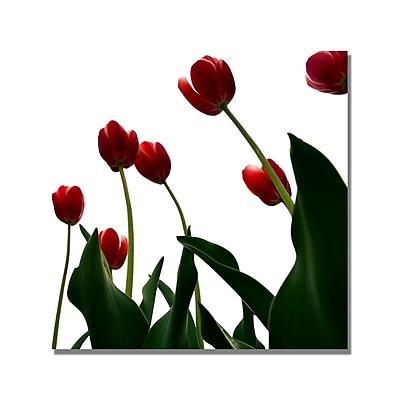 Trademark Fine Art Michelle Calkins 'Red Tulips from Bottom Up V' Canvas Art