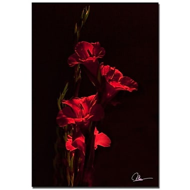 Trademark Fine Art Martha Guerra 'Gladiolus XI' Canvas Art