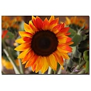 Trademark Fine Art Martha Guerra 'Sunflower V' Canvas Art