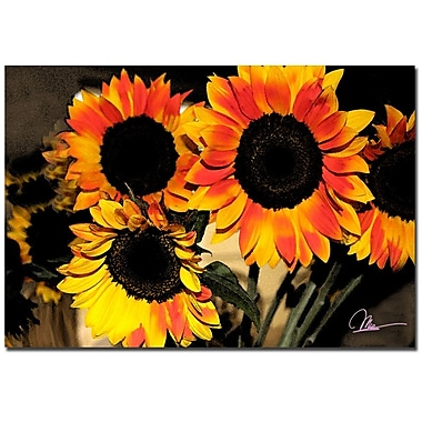 Trademark Fine Art Martha Guerra 'Sunflowers Abstract' Canvas Art