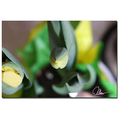 Trademark Fine Art Martha Guerra 'Tulips IV' Canvas Art, MG0127-C1624GG