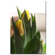 Trademark Fine Art Martha Guerra 'Tulips V' Canvas Art, MG0128-C1624GG