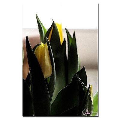 Trademark Fine Art Martha Guerra 'Tulips VI' Canvas Art