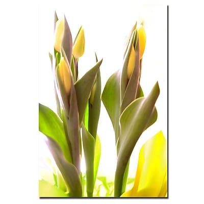 Trademark Fine Art Martha Guerra 'Tulip Blooms' Canvas Art