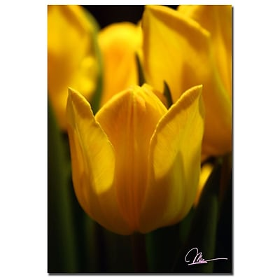 Trademark Fine Art Martha Guerra 'Tulip Blooms II' Canvas Art