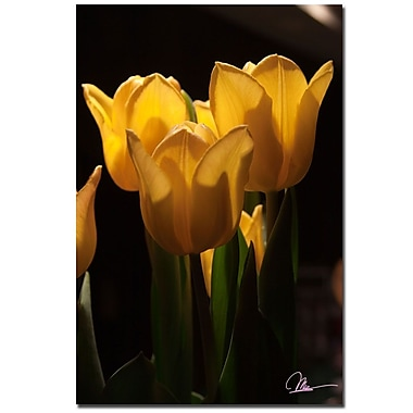 Trademark Fine Art Martha Guerra 'Tulips Blooms V' Canvas Art