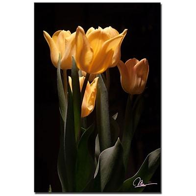 Trademark Fine Art Martha Guerra 'Tulips Blooms VII' Canvas Art