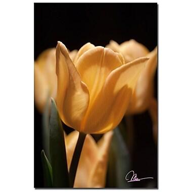 Trademark Fine Art Martha Guerra 'Tulips Blooms VIII' Canvas Art