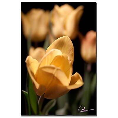 Trademark Fine Art Martha Guerra 'Open Tulip' Canvas Art