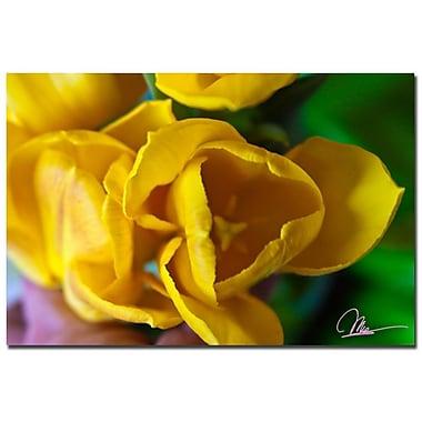 Trademark Fine Art Martha Guerra 'Open Tulip II' Canvas Art