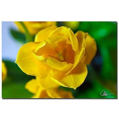 Trademark Fine Art Martha Guerra 'Open Tulip III' Canvas Art