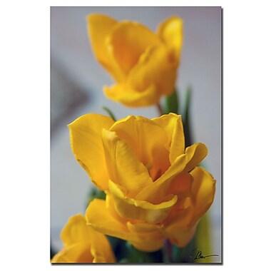 Trademark Fine Art Martha Guerra 'Yellow Tulips II' Canvas Art