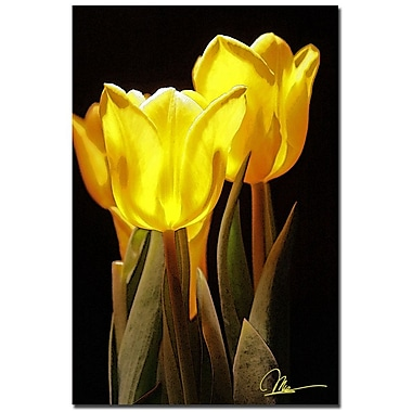 Trademark Fine Art Martha Guerra 'Yellow Tulips IV' Canvas Art