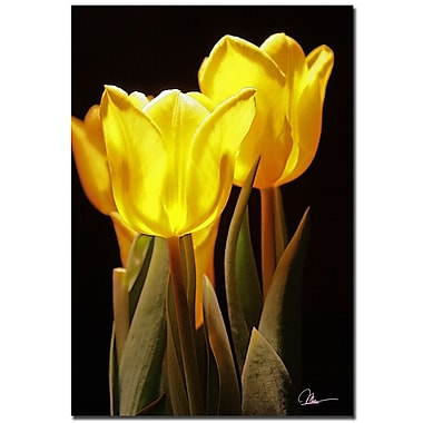 Trademark Fine Art Martha Guerra 'Yellow Tulips III' Canvas Art 16x24 Inches