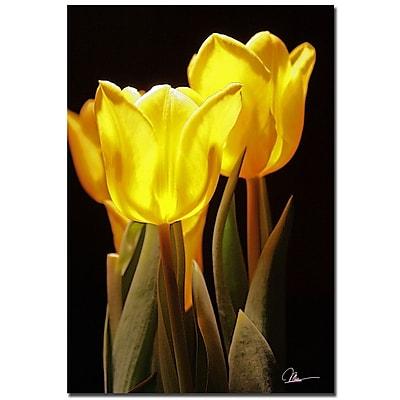 Trademark Fine Art Martha Guerra 'Yellow Tulips III' Canvas Art 22x32 Inches