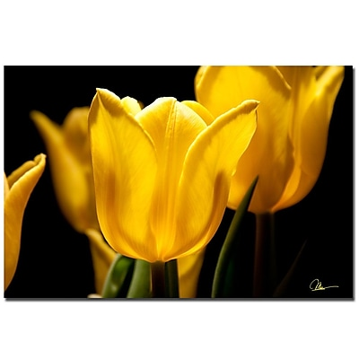 Trademark Fine Art Martha Guerra 'Yellow Tulips V' Canvas Art