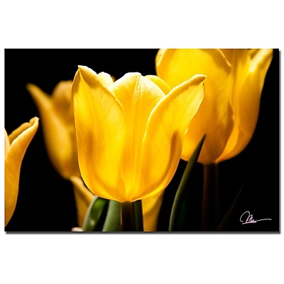 Trademark Fine Art Martha Guerra 'Yellow Blooms' Canvas Art