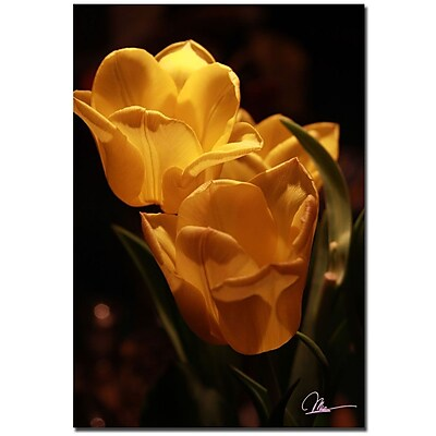 Trademark Fine Art Martha Guerra 'Three Pink Tulips' Canvas Art
