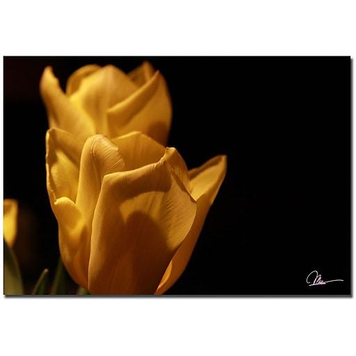 Trademark Fine Art Martha Guerra 'Pink Tulips' Canvas Art