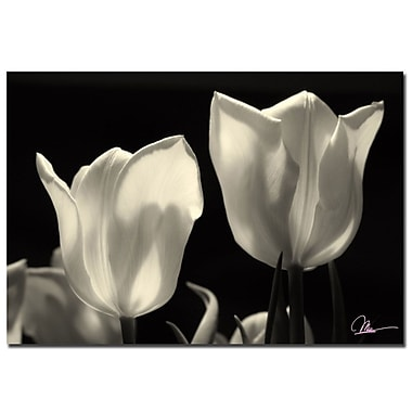 Trademark Fine Art Martha Guerra 'Tulips' Canvas Art 16x24 Inches