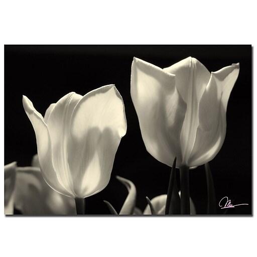 Trademark Fine Art Martha Guerra 'Tulips' Canvas Art 22x32 Inches