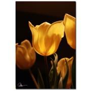 Trademark Fine Art Martha Guerra 'Tulips IV' Canvas Art, MG0172-C2232GG