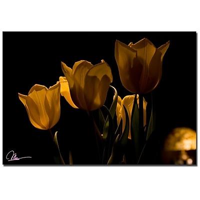 Trademark Fine Art Martha Guerra 'Tulips V' Canvas Art, MG0174-C2232GG