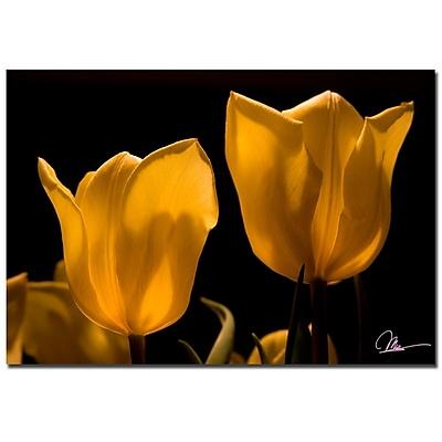 Trademark Fine Art Martha Guerra 'Yellow Bouquet II' Canvas Art