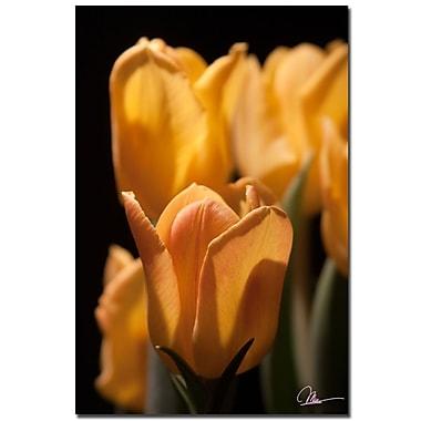 Trademark Fine Art Martha Guerra 'Pink Tulip Canvas Art