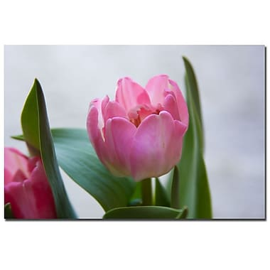 Trademark Fine Art Martha Guerra 'A Pair of Tulips' Canvas Art