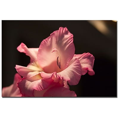 Trademark Fine Art Martha Guerra 'Pink Lily' Canvas Art Ready to Hang 14x19 Inches