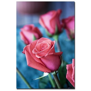Trademark Fine Art Martha Guerra 'Pink Rose II' Canvas Art