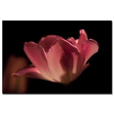 Trademark Fine Art Martha Guerra 'Blooming Tulip III' Canvas Art