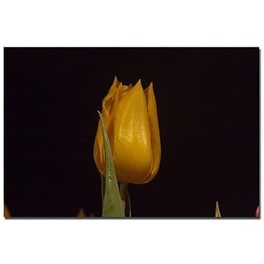 Trademark Fine Art Martha Guerra 'Blooming Tulip V' Canvas Art