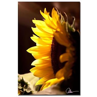 Trademark Fine Art Martha Guerra 'Gladiolus I' Canvas Art