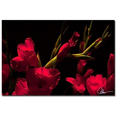Trademark Fine Art Martha Guerra 'Gladiolus III' Canvas Art