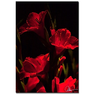 Trademark Fine Art Martha Guerra 'Gladiolus V' Canvas Art