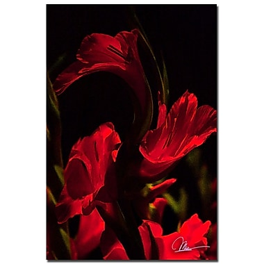 Trademark Fine Art Martha Guerra 'Gladiolus VI' Canvas Art