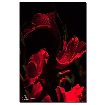 Trademark Fine Art Martha Guerra 'Gladiolus VII' Canvas Art, MG098-C2232GG