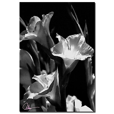 Trademark Fine Art Martha Guerra 'Gladiolus VII' Canvas Art, MG099-C2232GG