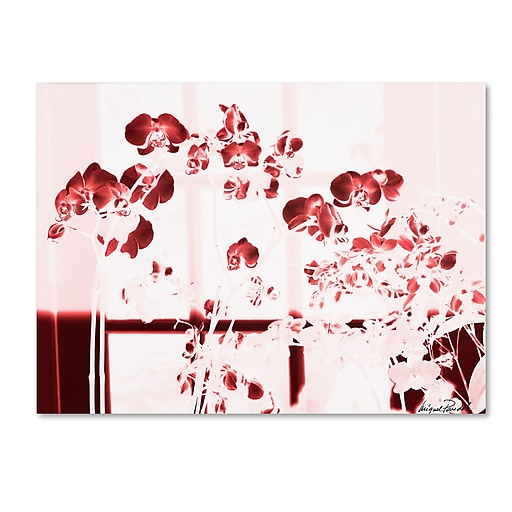 Trademark Fine Art Miguel Paredes 'Red Orchids' Canvas Art 35x47 Inches