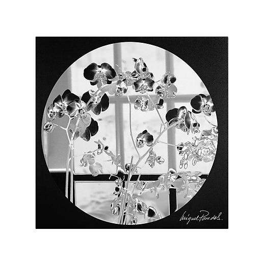 Trademark Fine Art Miguel Paredes 'Black Orchids' Canvas Art 14x14 Inches