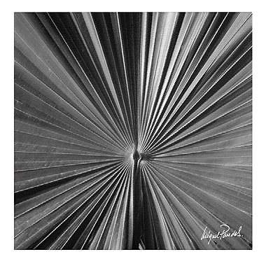Trademark Fine Art Miguel Paredes 'Pines VII' Canvas Art