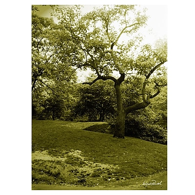 Trademark Fine Art Miguel Paredes 'Central Park II' Canvas Art 24x32 Inches