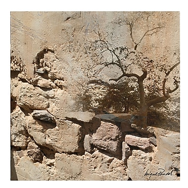 Trademark Fine Art Miguel Paredes 'Rock & Tree' Canvas Art 35x35 Inches