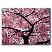 Trademark Fine Art Cherry Tree by CATeyes-Canvas Ready to Hang 18x24 Inches