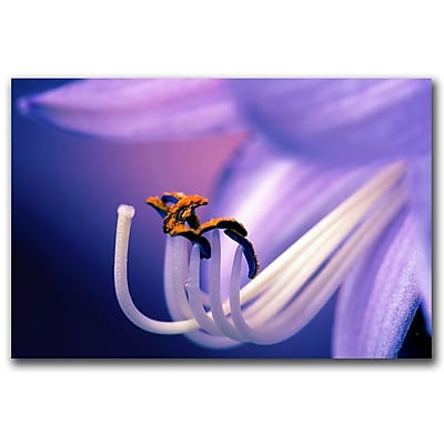 Trademark Fine Art CATeyes, 'Eternal Seductiveness' Canvas Art 16x24 Inches