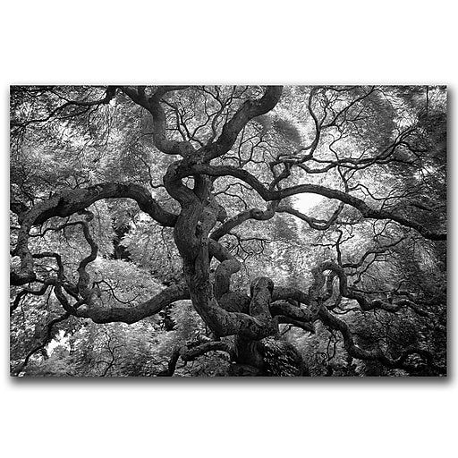 Trademark Fine Art Motivations by CATeyes-Canvas Art Ready to Hang 22x32 Inches