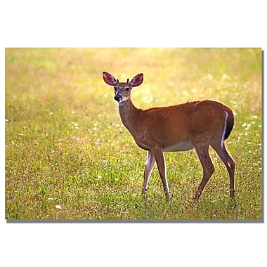 Trademark Fine Art MCat 'Young Buck' Canvas Art